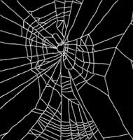 Web of Spider on Benzedrine